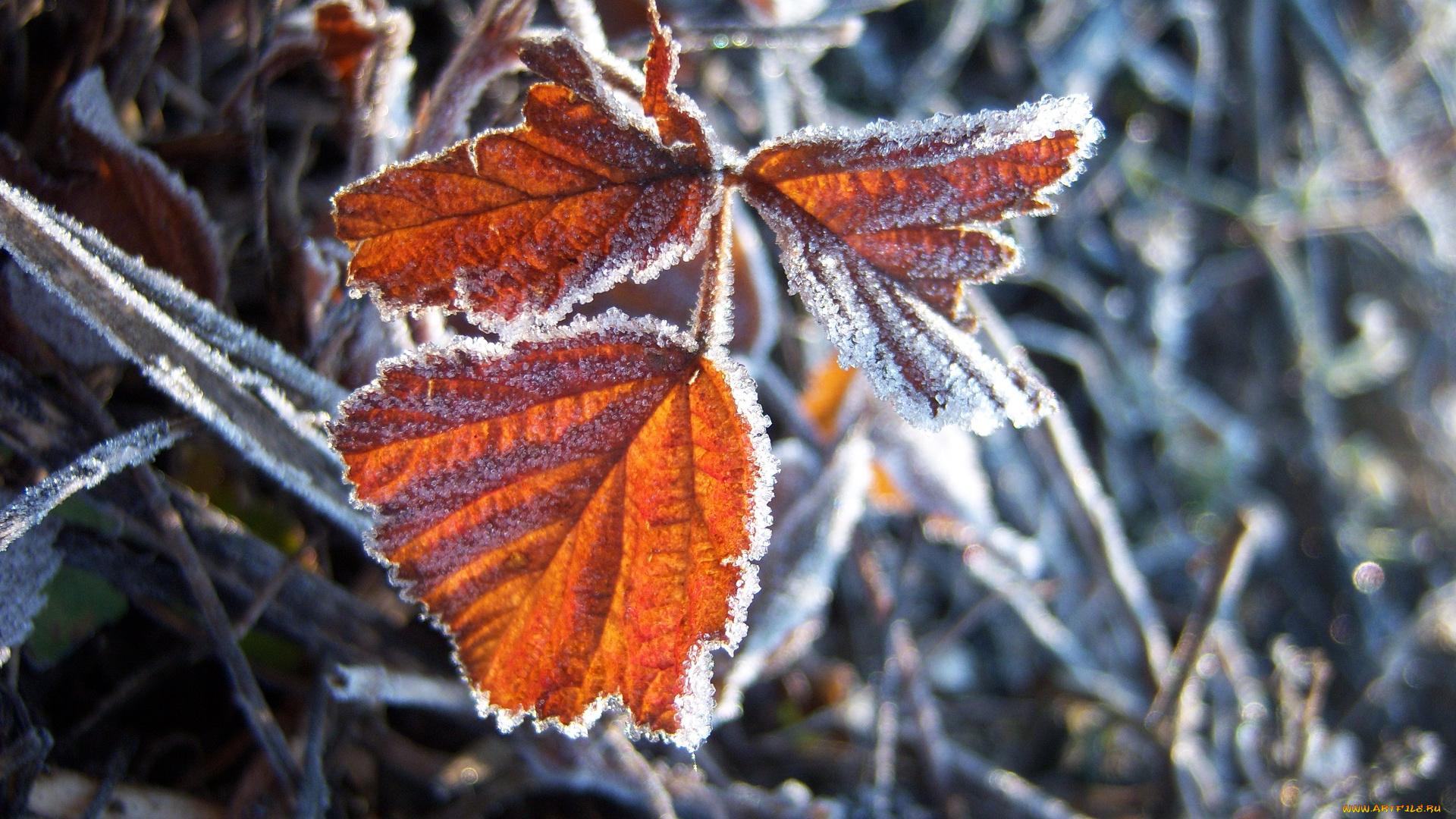 Иней листья без смс
