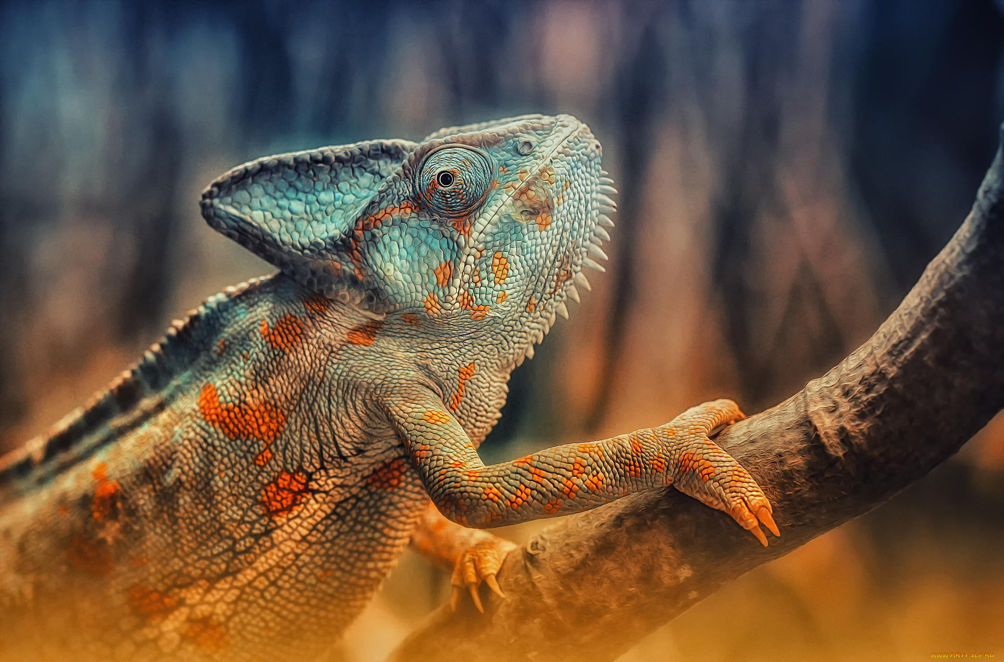 Открытки с рептилиями