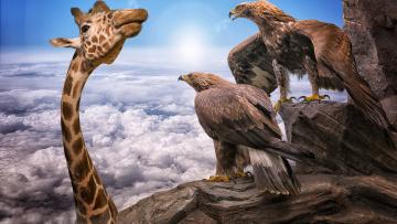 обоя юмор и приколы, облака, жирафы, орлы