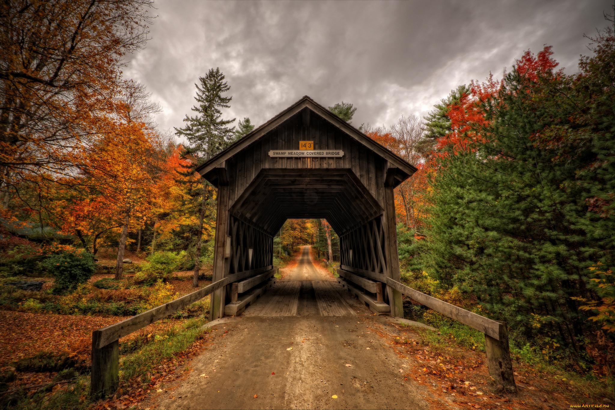осень лес мост листва бесплатно