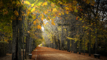 Картинка природа парк деревья аллея дорожка