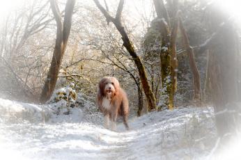 Картинка животные собаки лес деревья поток водопад