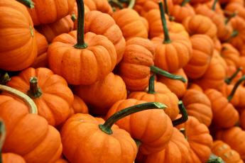 обоя еда, тыква, осень, урожай, много