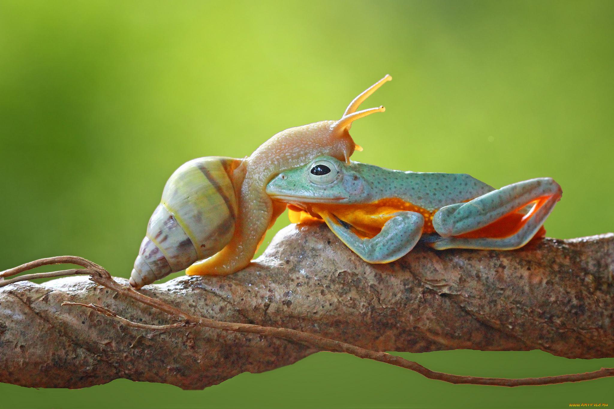 природа животные улитка без смс