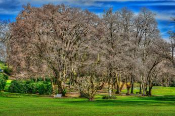 Картинка природа деревья поляна