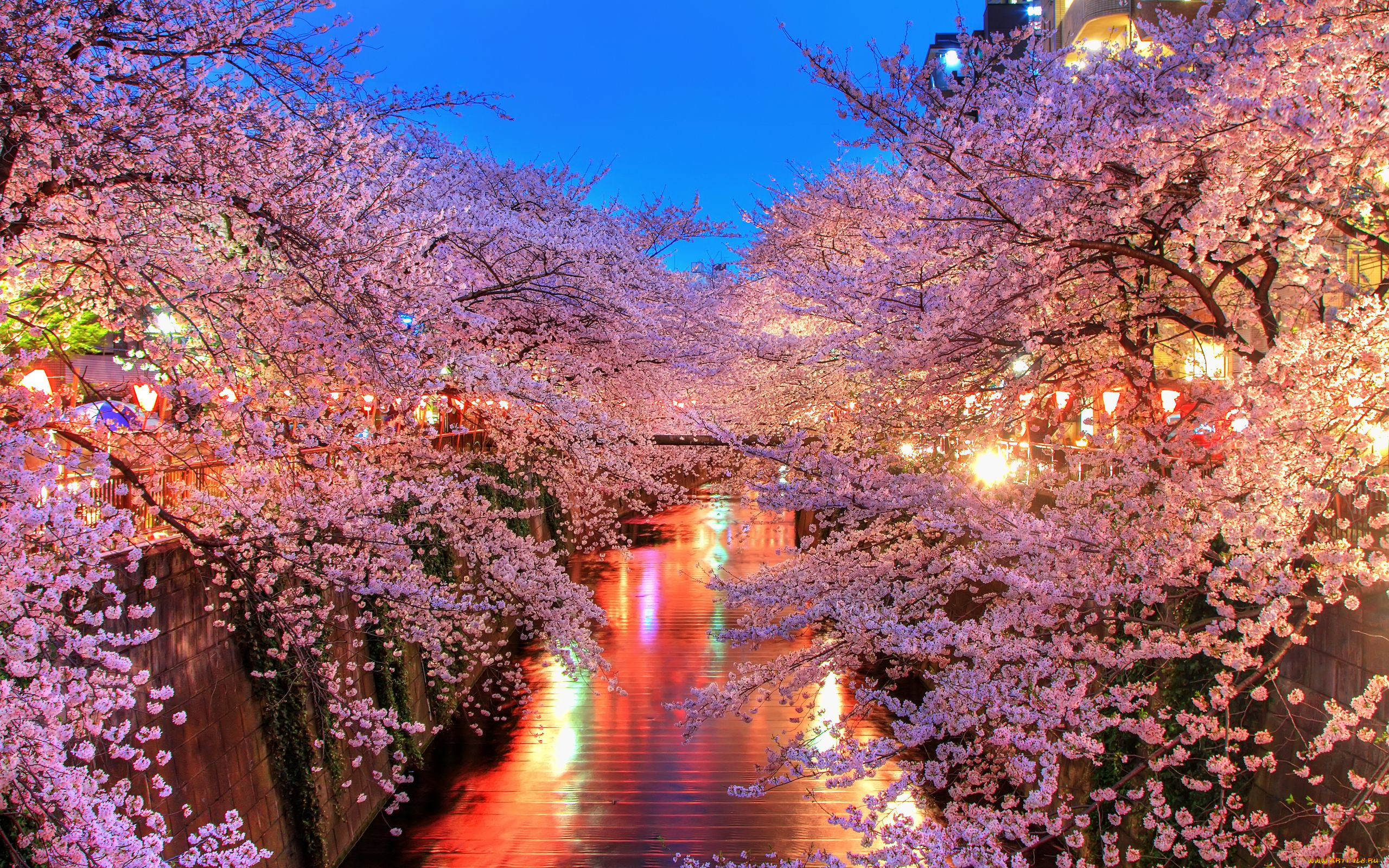 cherry blossom pictures - HD2048×1536