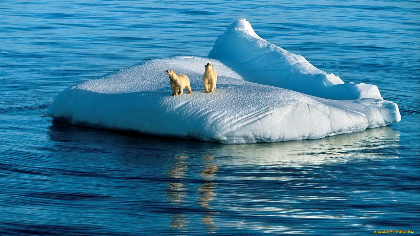 Белоснежный айсберг бесплатно