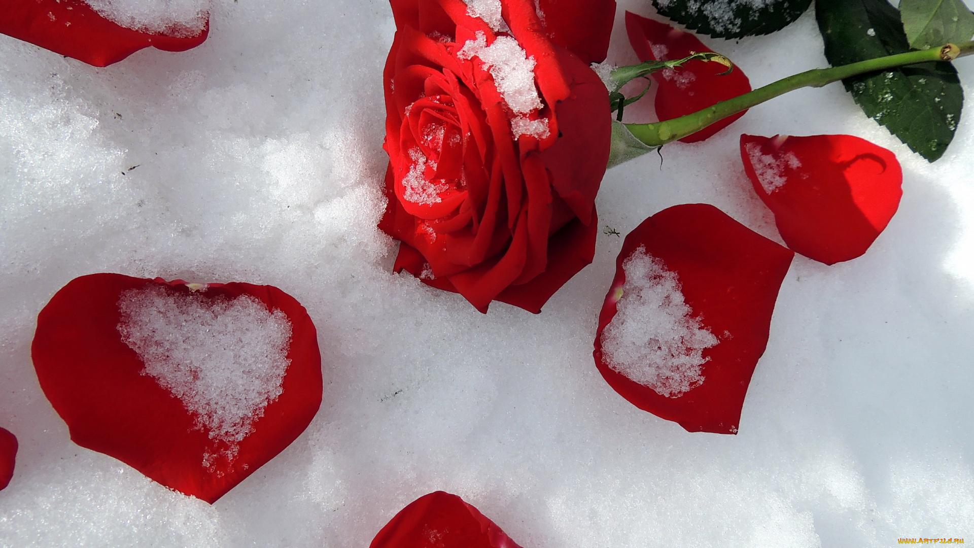 Букет цветов на снегу в темноте, розничный склады цветов