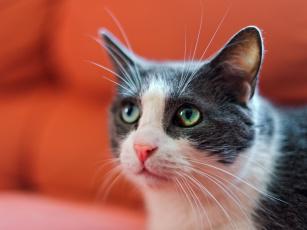 Картинка животные коты мордочка