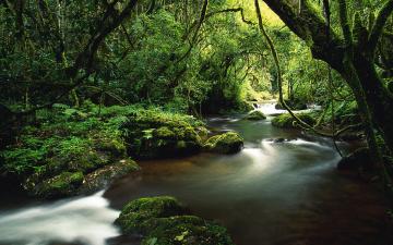 Картинка природа реки озера джунгли растительность