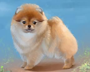 обоя рисованное, животные,  собаки, карликовый, шпиц, собака, by, salamandra-s