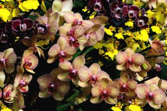 Картинка цветы орхидеи экзотика много