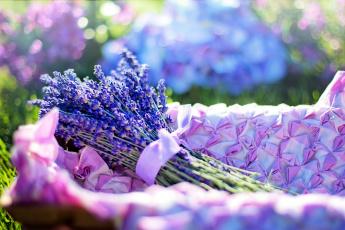 обоя цветы, лаванда, синий