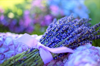 обоя цветы, лаванда, синий, бант