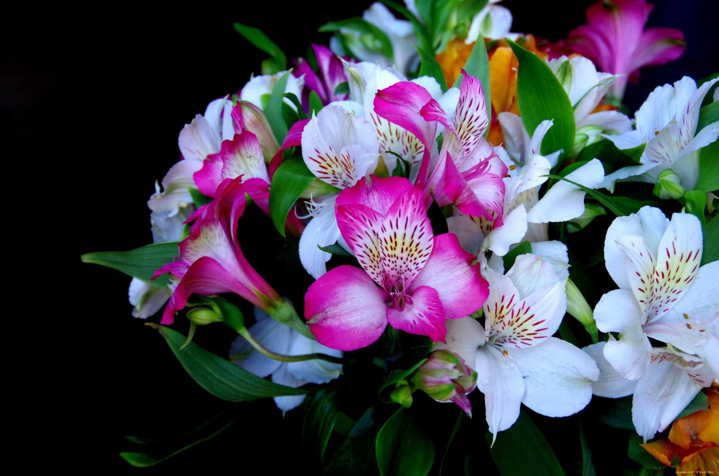 Цветок для букетов похож на лилию
