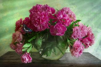 обоя цветы, пионы, аквариум, ваза, столик, бабочка