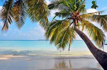 обоя природа, тропики, остров, отдых, пальмы, пляж, море