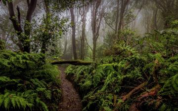 обоя природа, тропики, растительность, папоротник, лес, деревья