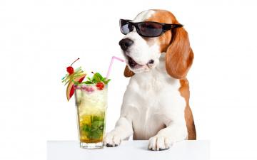 обоя юмор и приколы, очки, лапы, пробка, бассет-хаунд, стекло, коктейль, белый, фон, юмор, напиток, лица, стол