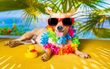 обоя юмор и приколы, очки, юмор, собака, уточка, язык