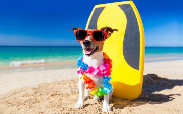 обоя юмор и приколы, собака, пляж, джек-рассел-терьер, гирлянда, юмор