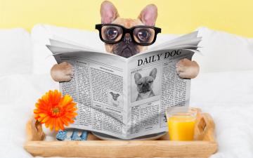 обоя юмор и приколы, стакан, собака, юмор, сок, очки, газета, окуляры