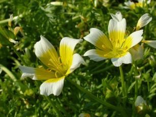 Картинка цветы луговые+ полевые +цветы лепестки