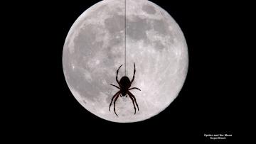 обоя животные, пауки, паук, луна