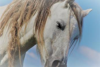 обоя животные, лошади, грива, лошадь, конь