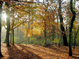 Лучи солнца в осеннем лесу без смс