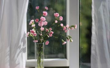 обоя цветы, гвоздики, ваза, окно, букет