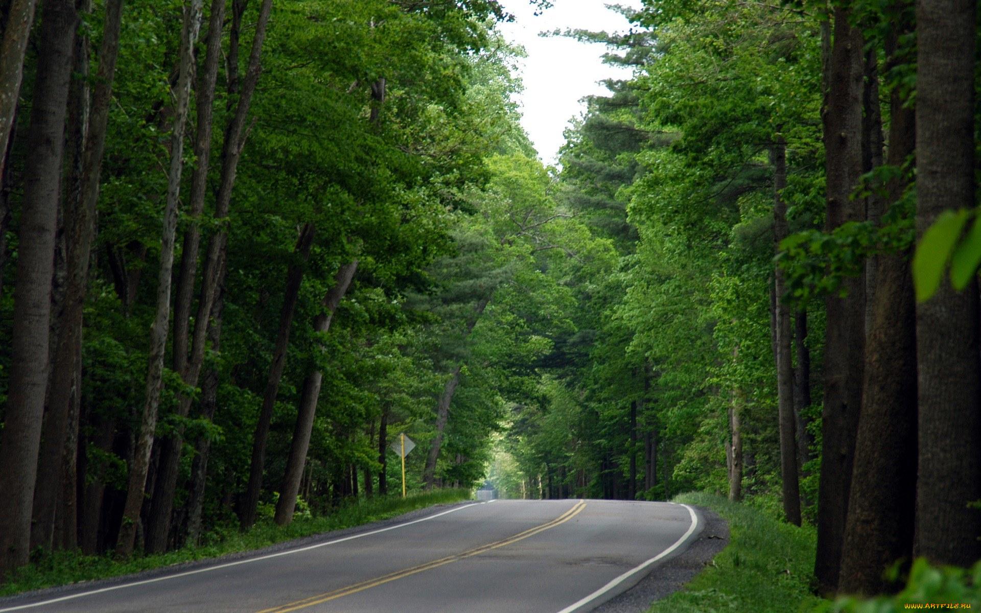 дорога лес road forest скачать