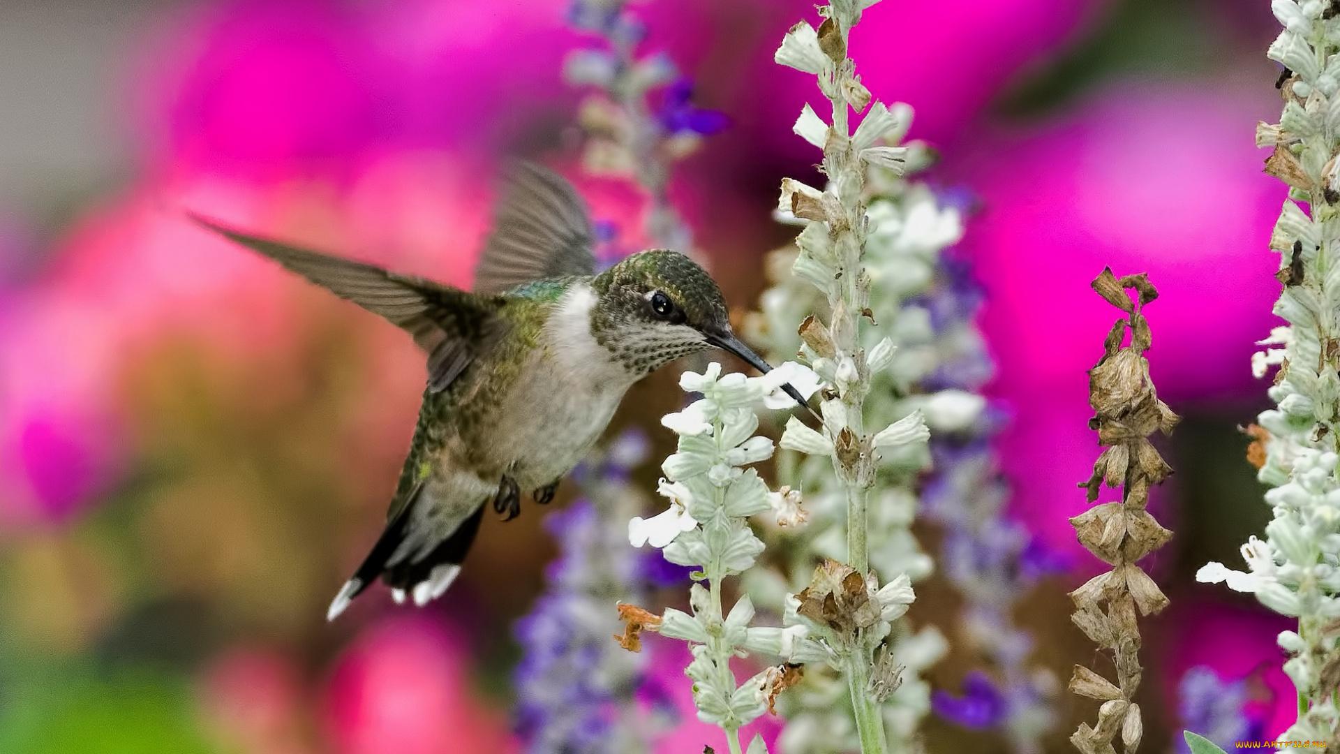 природа колибри цветы птицы на телефон