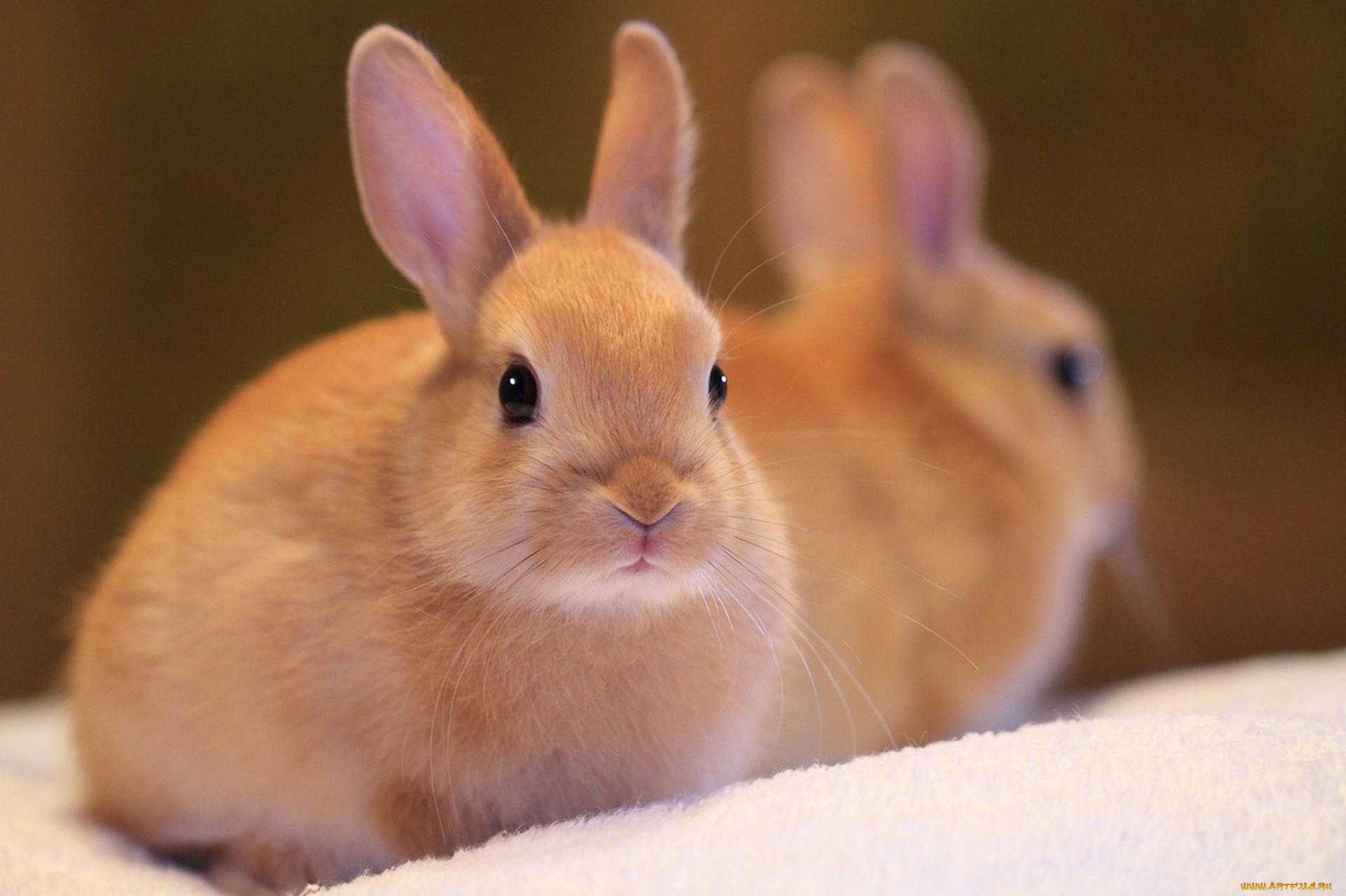 Смешных поз, картинка кроликов