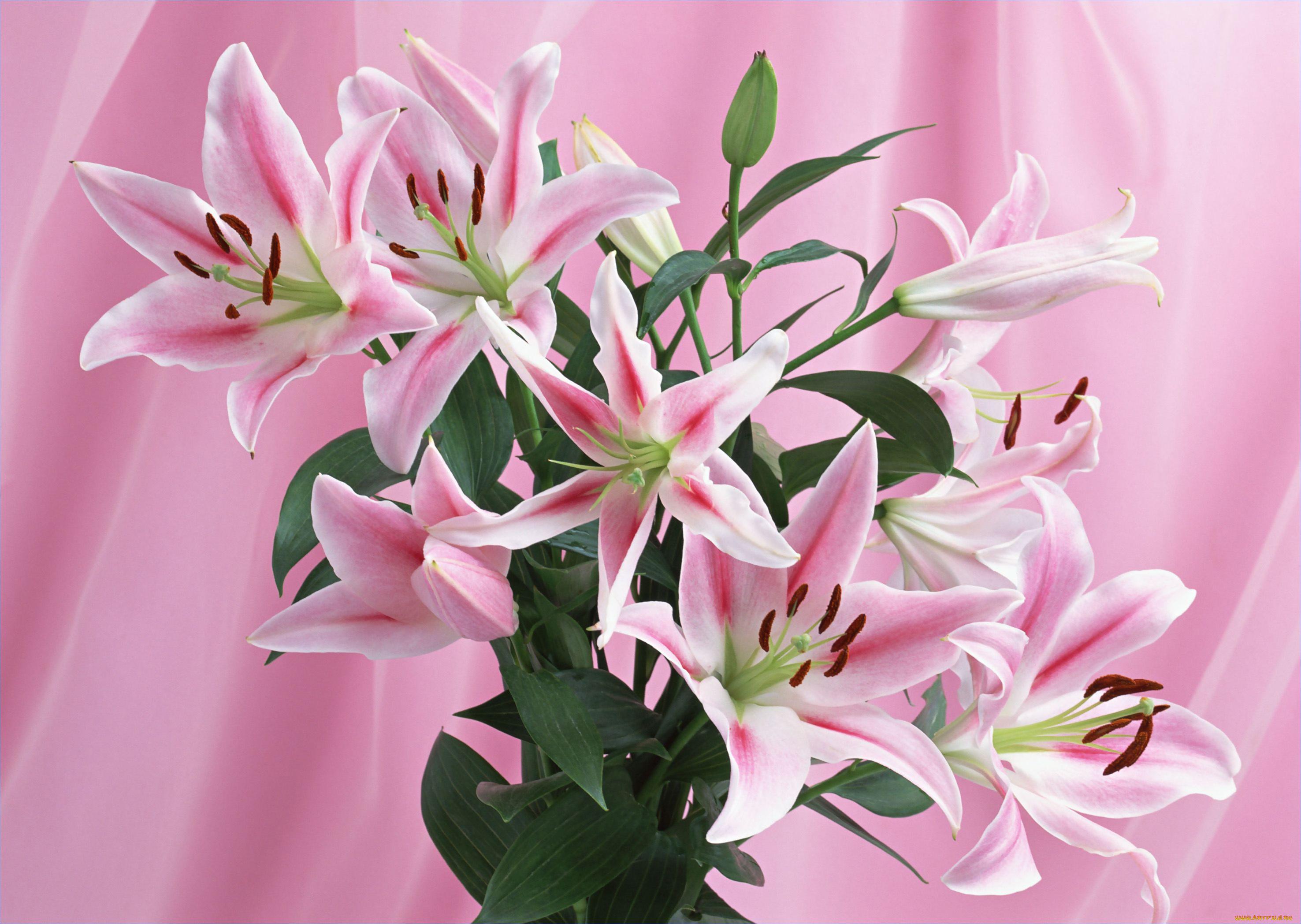 Открытка цветок лилии, молодец