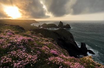 обоя природа, побережье, цветы, облака, вода, скалы