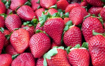 обоя еда, клубника,  земляника, много, ягоды