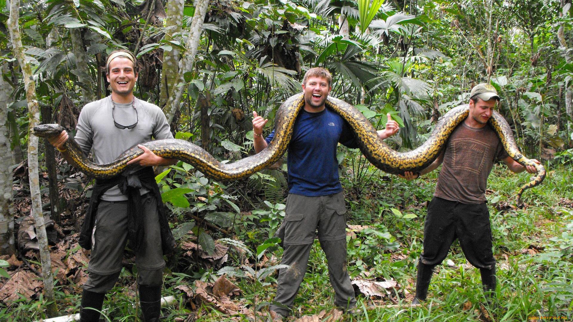 фото самых длинных змей на планете начале торжественной