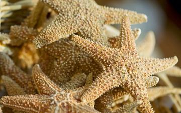обоя животные, морские, звёзды, природа, макро