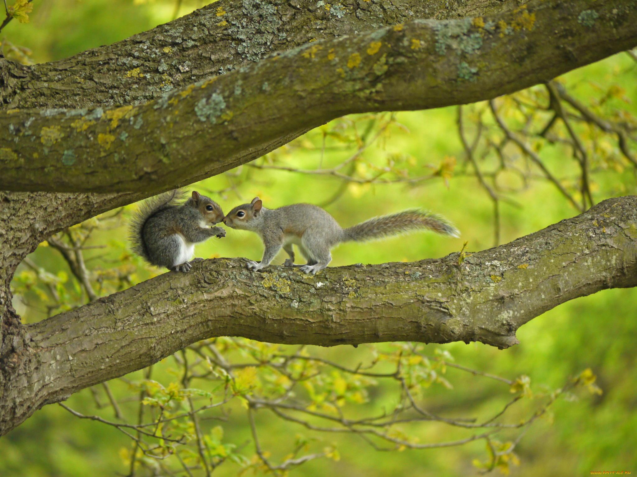 Белка на высохшем дереве загрузить