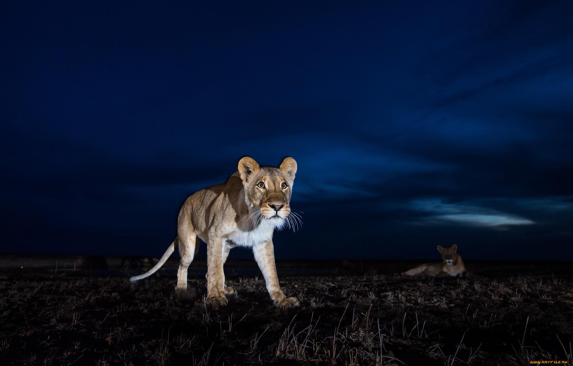 Очень красивые картинки с животными ночью