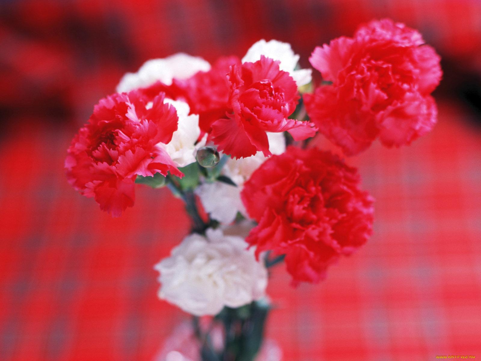 Картинки с красивым букетом цветов гвоздики, днем