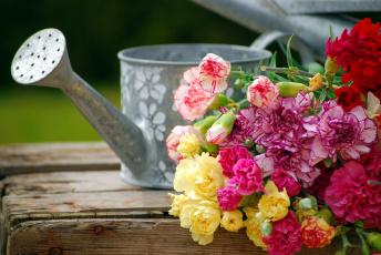 обоя цветы, гвоздики, бутоны