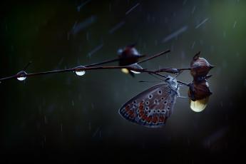 обоя животные, бабочки,  мотыльки,  моли, дождь, капли, бабочка, макро, ветка