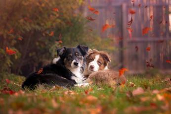 обоя животные, собаки, осень, природа