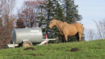 обоя животные, лошади, лошадь