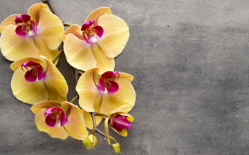 обоя цветы, орхидеи, экзотика