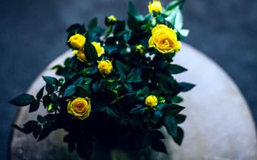 обоя цветы, розы, бутоны, желтые