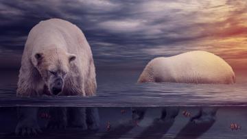 обоя животные, медведи, фон