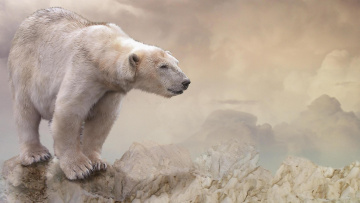 обоя животные, медведи, медведь, фон